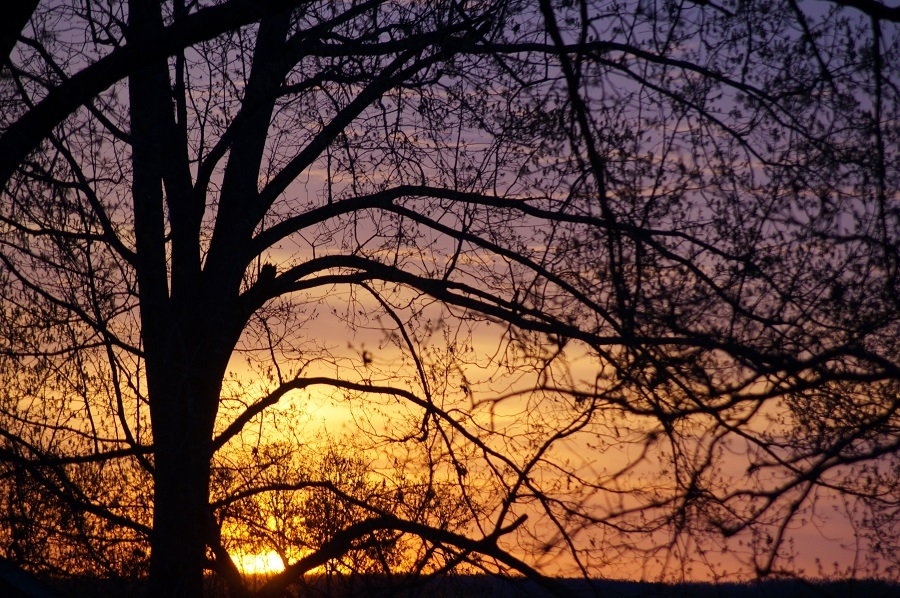 Sunset through the tree branches