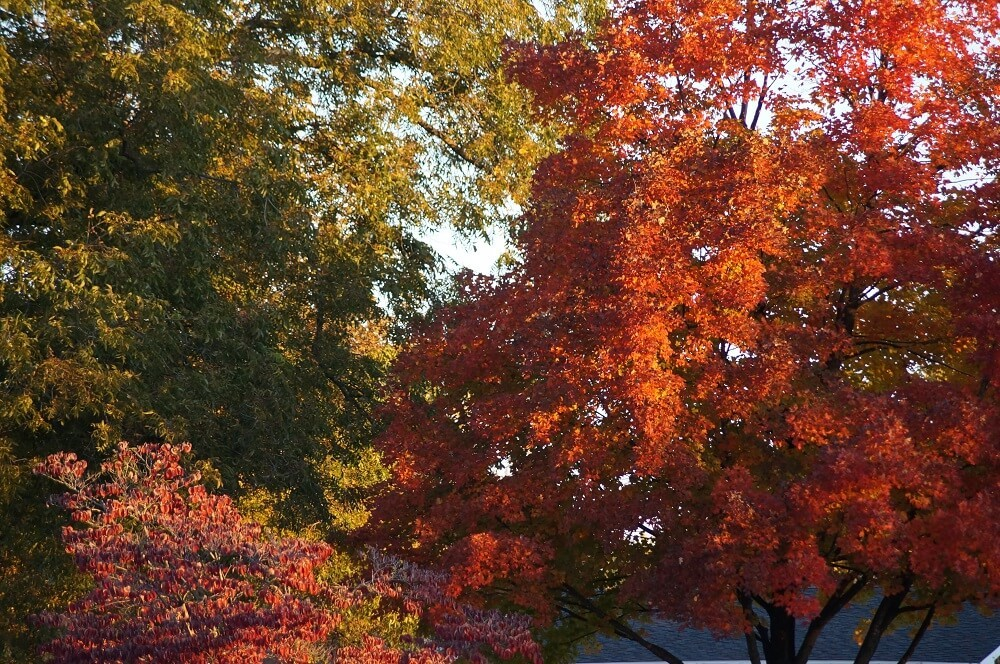 A mixture of trees showcasing orange, green, and pink leaves.