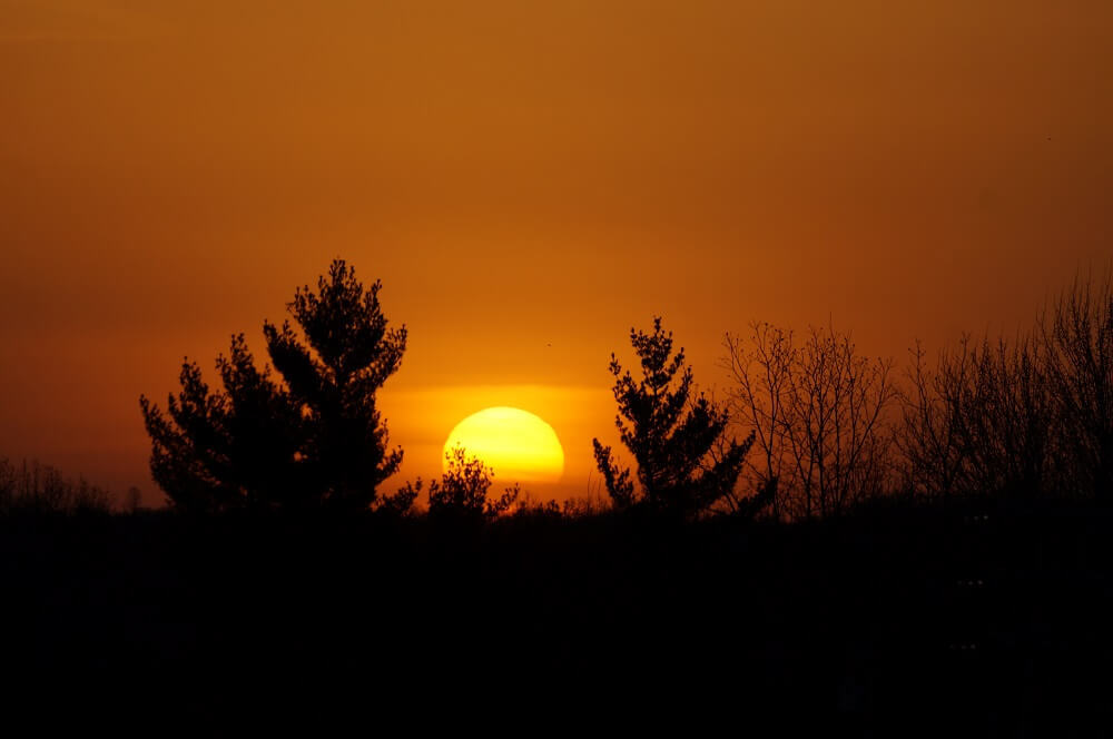 Two trees blowing in the wind while the sun is centered between them and an orange colored sky.