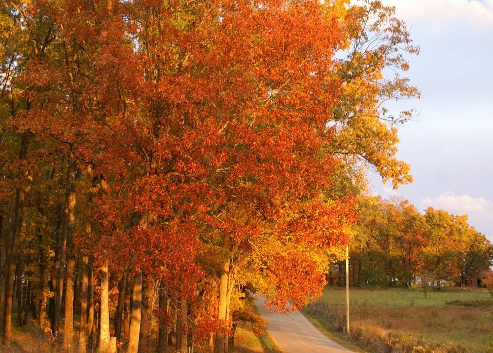 Fall colored trees leaning over a road.